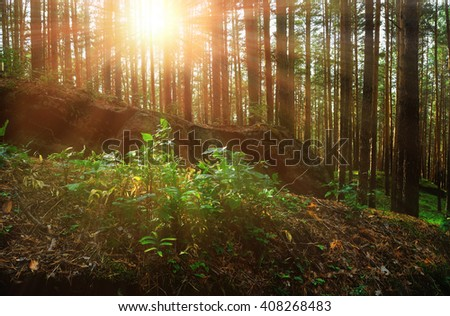 Ancient Stone Boulder In Form Of Sleeping Dragon In The Sunrise Light In  The Forest At