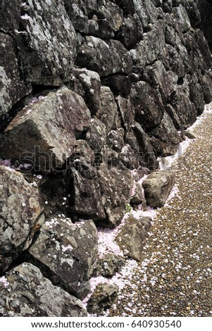 Ancient wall of round and crushed stones with fallen cherry blossom petals
