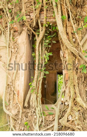 ancient windows with bodhi tree roots