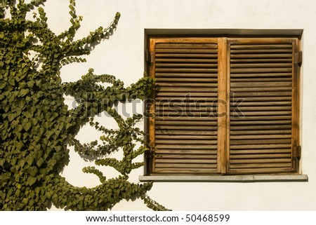 ancient wooden window and climbing green plant - stock photo