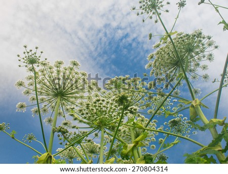 And Blue Sky On a Field  - stock photo