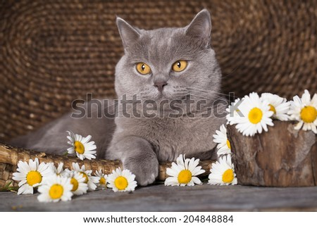 and flowers - stock photo