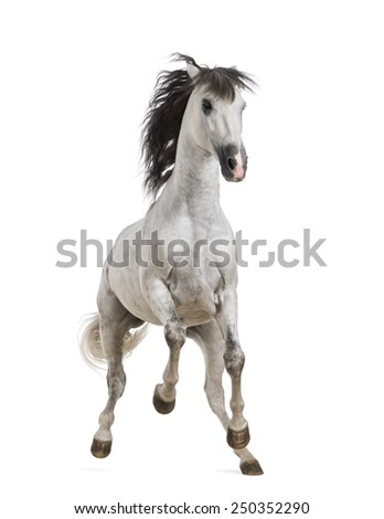 Andalusian horse - stock photo
