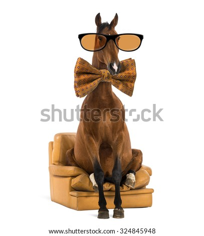 Andalusian horse sitting on an armchair, wearing glasses and a bow tie - stock photo