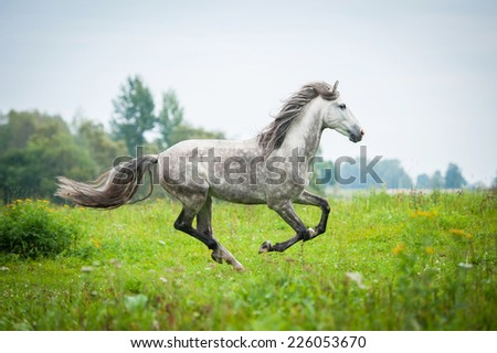 Andalusian stallion running on the pasture in autumn - stock photo