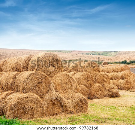 andscape view of a farm field with gathered crops - stacks of wheat