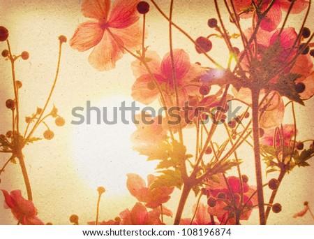 anemone japonica - stock photo