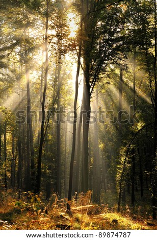 Angel in the forest. - stock photo