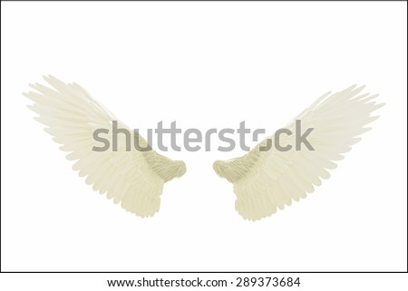 angel wings isolated on white background - stock photo