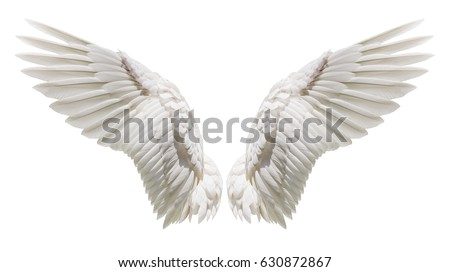 Angel wings, Natural white wing plumage isolated on white background with clipping part