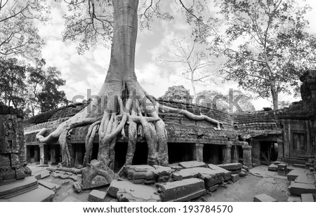 Angkor Wat Cambodia. Ta Prohm Khmer ancient Buddhist temple in jungle forest. Famous landmark, place of worship and popular tourist travel destination in Asia.  - stock photo