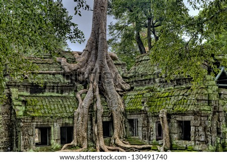 Angkor Wat Temple With Tree Growing Out of It - stock photo