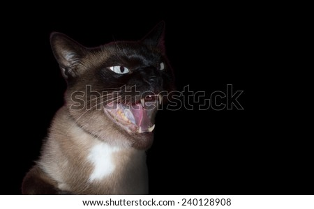 angry and aggressive cat on black background - stock photo