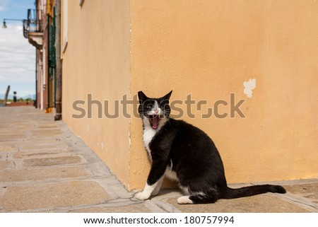 Angry Black cat in Burano Island, Venice/Angry Black cat - stock photo