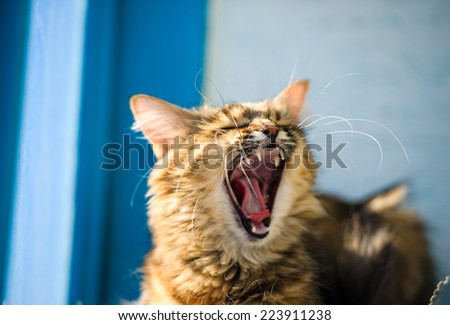 Angry cat - stock photo