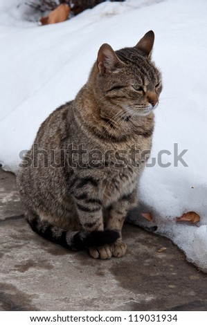 angry cat in winter time - stock photo