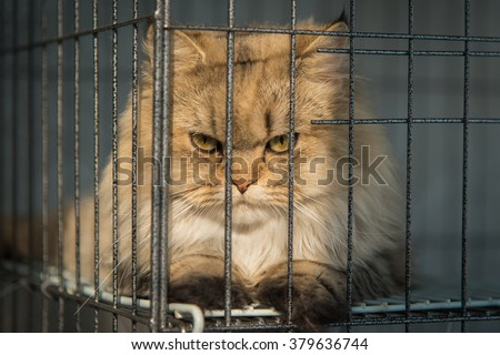 Angry cat looking behide the bars - stock photo