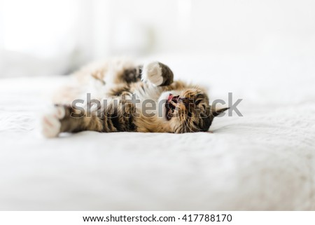 angry cat lying on bed - stock photo