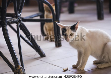 Angry Cat serious. Two cats of something fear, one of them is hiding behind a chair - stock photo
