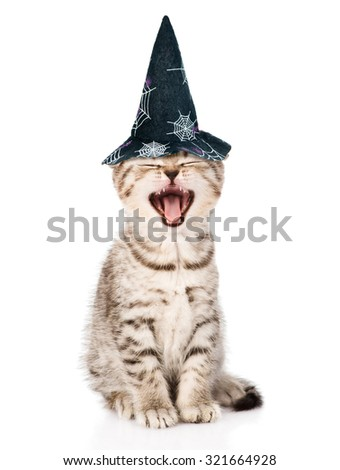 Angry cat with hat for halloween. isolated on white background - stock photo