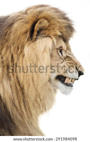 Angry king - stock photo