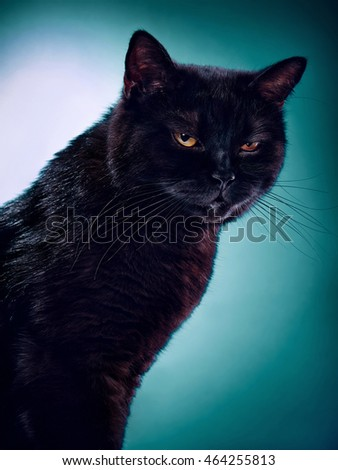 Angry Looking Black Cat On A Green Background