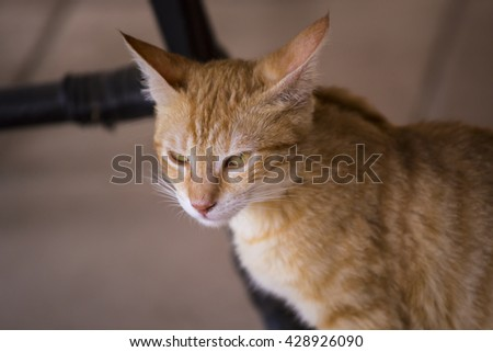 angry red cat. Portrait of a red cat with cunning expression - stock photo
