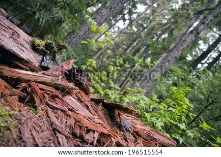 Angular view of debris and pieces of bark on the forest floor. - stock photo