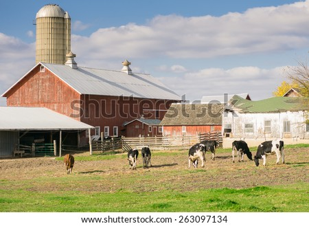 Angus cow grazing in the prairie of a farm, raised for Organic Milk - stock photo