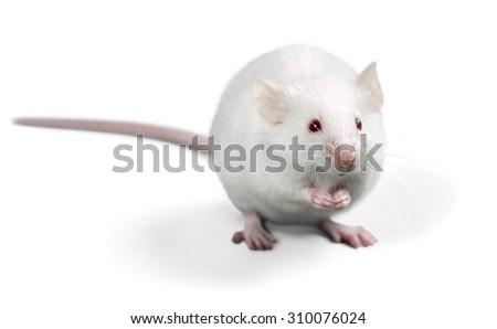 Animal. - stock photo