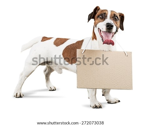 Animal, arrest, bad. - stock photo