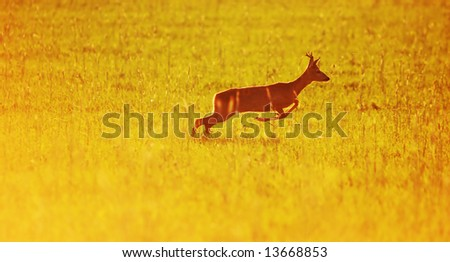 Animal background beautiful roe-deer running. With copyspace