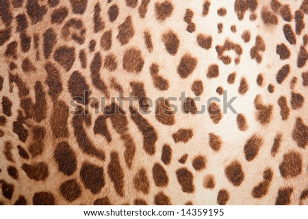 Animal background - leopard pattern texture -