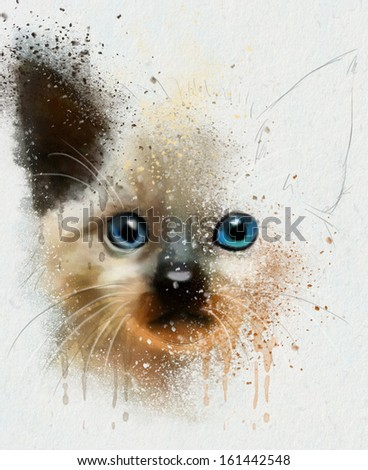animal collection: Cat - stock photo