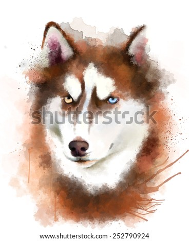 Animal collection: portrait of a Husky - stock photo