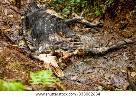 Animal Corpse In The Amazonian Jungle Approx 2 Weeks From The Death Time