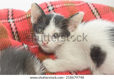 animal cute little kitten on textile pattern