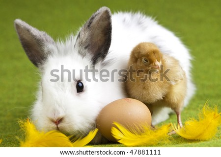 Animal easter - stock photo