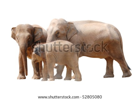 animal elephant family isolated in white - stock photo