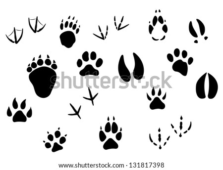Animal footprints and tracks isolated on white for wildlife concept design. Vector version also available in gallery - stock photo