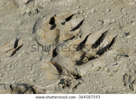 Animal Footprints in Mud