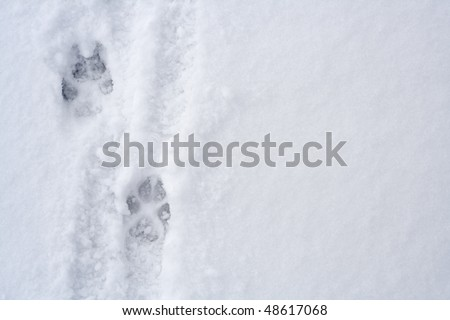 Animal footprints on snow