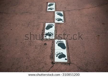 animal footprints paint on the floor - stock photo