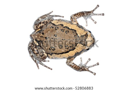 animal frog isolated in white