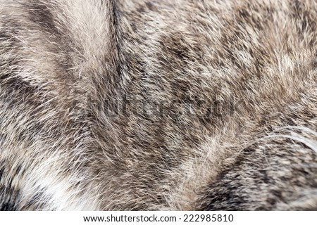 animal fur as background - stock photo