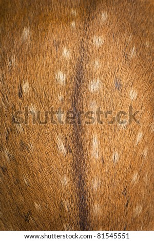 Animal fur, the background texture deer
