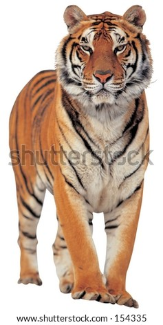 Animal Image