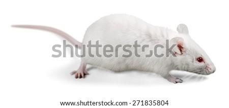 Animal, lab, test. - stock photo