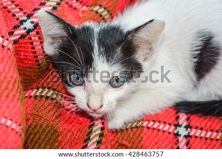 animal little kitten cat(thai cat) on textile pattern