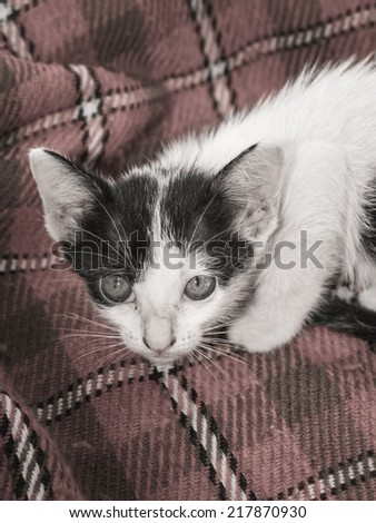 animal little kitten (thai cats) on textile pattern with retro filter